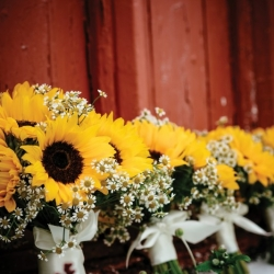 Sunflower and daisy bouquets
